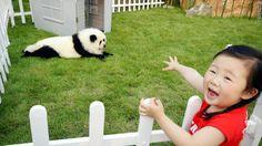 Not a panda...