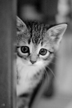 Shy kitty.