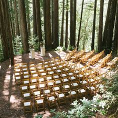 Redwood Forest Wedding Venues 6 wedding locations Awesome Redwood Forest Wedding Venues For Perfect Wedding Redwood Forest Wedding, Forest Wedding Venue, Wedding In The Woods, Woodland Wedding, Wedding In Nature, Woods Wedding Ceremony, Rustic Wedding, Wedding Reception, Ceremony Seating