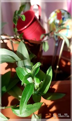 by CharMa Plants, Pictures, Flowers, House, Flora, Plant, Planting