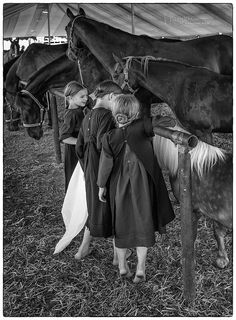 Amish Girls and Pony