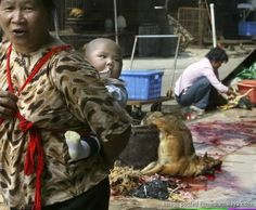 3 videos (Viewer discretion) children exposed to brutality in dog meat trade https://www.facebook.com/photo.php?fbid=268225076691913&set=a.215804971933924.1073741827.215802855267469&type=1&theater… #saynotodogmeat pic.twitter.com/f6tWN8juaH
