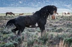 Ready to Fight   by Gerry Morrell on 500px  Sand Wash Basin, COLORADO   Wild Horses