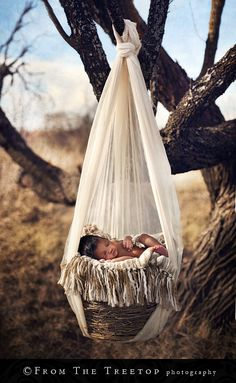 Baby in basket hanging from tree.