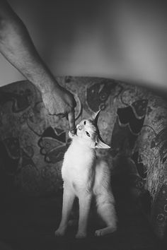 Cat and hand ;) by MonikaMalek on 500px