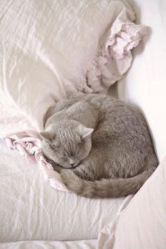 Age 69 persian kitty zoe - 1 1