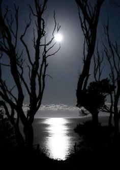 """Moondance"" by Geoff Coleman"