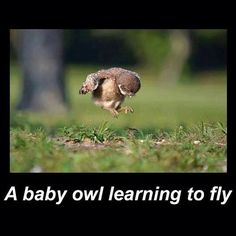 The owl baby learning to fly