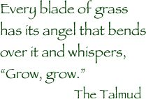 """Every blade of grass has its angel that bends over it and whispers, """"Grow, grow.""""- The Talmud."""