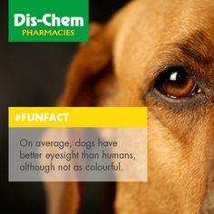 Did you know? Pharmacy, Did You Know, Fun Facts, Movies, Movie Posters, Films, Apothecary, Film Poster, Cinema
