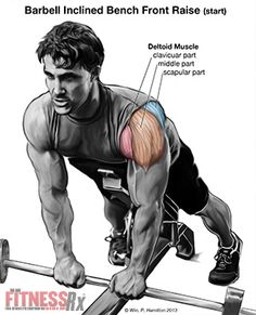 Build Your Anterior Deltoids - With Incline Bench Barbell Front Raises
