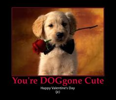 puppy valentine cute pun