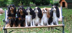 Una panchina di cavalier ;))