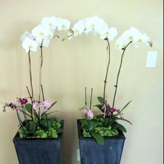 Potted orchids with moss