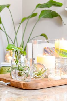 wooden tray with air plants and candles for coffee table decor #ad #bhglivebetter