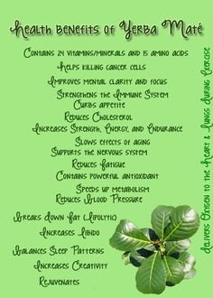 yerba mate tea benefits - Google Search