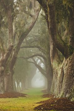 Magic Forest ~ historic Avenue of Oaks, St. Simons Island, Georgia by Barbara Marie Kraus