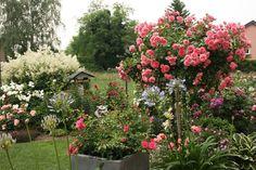 die grosse rosen laube 39 viktoria 39 von classic garden. Black Bedroom Furniture Sets. Home Design Ideas