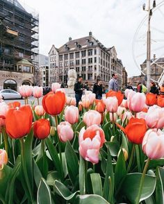 city, red, pink, tulips, buildings, gorgeous
