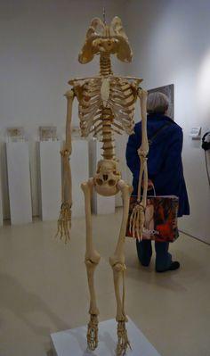Medicine Now Gallery, Hands-on activities