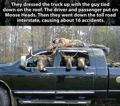 Well it's not funny they caused accidents but the scenario is hilarious