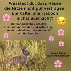 Hasen vertragen die Kälte sehr gut, die Hitze macht ihnen jedoch zu schaffen! Rabbit, Animals, Palm Reading, Moon Calendar, Enemies, Weather Vanes, Bunny, Rabbits, Animales