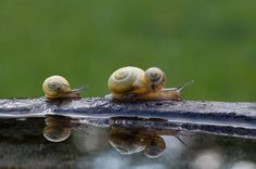 Snail Family - and, yes I know a snail is not an insect