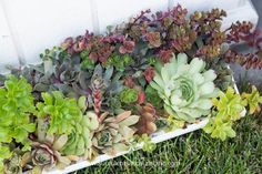 Did you know succulents need fertilizer? Find out how to fertilize your succulents in this post! Choosing a fertilizer specifically for succulents is extremely important. This post covers the best options for succulent fertilizer. Succulent Fertilizer, Succulent Care, Cool Plants, Air Plants, Indoor Plants, Backyard Vegetable Gardens, Garden Fun, Garden Ideas, Organic Gardening Tips
