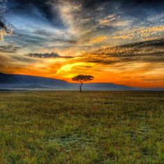Spectacular sunrise in the Masai Mara, Kenya