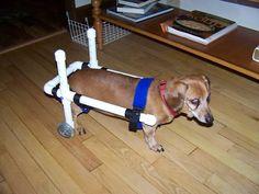 Dog Wheelchair, Dachshund WheelChairs, small dog wheelchairs, pet wheelchairs