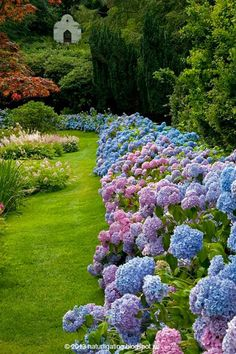 Hydrangea Border - 17 Dreamy Hydrangea Gardens That Have Us So Ready for Spring - Southernliving. Skip the fence and line your yard with a thick border of hydrangeas. We love the color variety here. See Pin