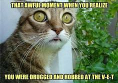 This kitty has just come to the horrible realization about a recent trip he made.
