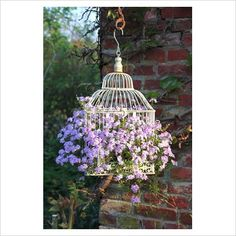 Beautiful Bird Cage Ideas for Your Garden. Beautiful Bird Cage Ideas for Your Garden. Of course the cage to be built must be adjusted to the house or garden building, so that the overall aesthe. Cage Deco, Birdcage Planter, Decoration Plante, Plant Pictures, Deco Floral, Bird Cages, Dream Garden, Garden Projects, Garden Pots