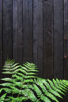 I have a black fence all the way round my garden. So need to think of any colours for the decking Black wooden cladding - Huize Monnikenheide - - photo by Dorothee Dubois