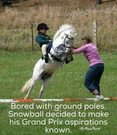 Maybe they should be feeding this little pony some Grand Prix feed to fuel his aspirations!