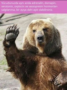 Wallpaper Funny Hello Bear - 1920 x 1279 - Strange Funny Weird Crazy Absurd Awesome - photo image free beautiful Funny Animal Clips, Funny Animal Videos, Funny Animals, Cute Animals, Pet Videos, Wild Animals, Outlander Funny, Bear Images, Bear Photos