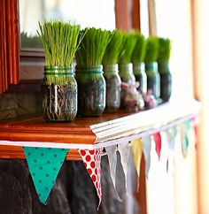 Homegrown Wheatgrass in Mason jars! Bright decoration for your mantle.