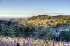 Gavi: il vino che racconta il suo terroir e la sua storia.  Gavi: the wine that tells its terroir and its history.
