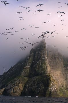 """Gannets Above Boreray, St. Kilda"" The uninhabited Island."