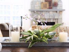 Plant Arrangements - Green Flower Arrangements - Good Housekeeping