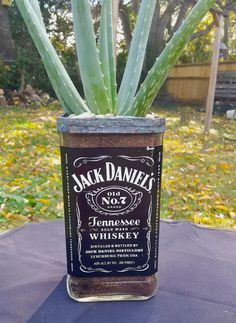 The bottom of a Jack Daniel's bottle is the perfect home for any type of plant!