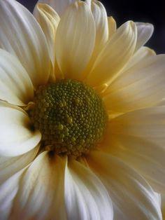 pollyannapumpkin: http://s667.photobucket.com/albums/vv39/marie58_bucket