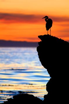 Egret Silhouette at Sunset - Corona del Mar State Beach, CA