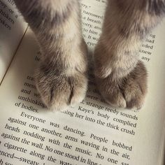 cute cat paws sitting on a book.kittyloverscl… – Cats – … cute cat paws sitting on a book. I Love Cats, Cute Cats, Funny Cats, Grumpy Cats, Adorable Kittens, Crazy Cat Lady, Crazy Cats, Cat Paws, Dog Cat