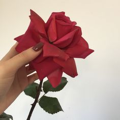 120 Best Mini White Rose Images Photography Red Aesthetic Red Roses