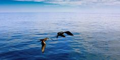 Uncover Galapagos - Northern and Southern Islands in Galapagos, South America $4299