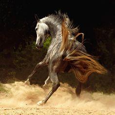 Los caballos de WojtekKwiatkowski   Humanismo y Conectividad