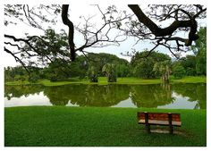 This photo from Perak, West is titled 'Taiping Lake Garden'. Garden Mulch, Lake Garden, Outdoor Landscaping, Outdoor Decor, Taiping, Parts Of A Plant, Artificial, Places Of Interest, Cool