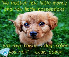 No matter how little money and how little possessions you own, having a dog makes you rich.
