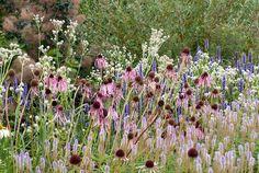 Echinacea pallida, Eryngium yuccifolium + Veronicastrum virginicum Lavendelturm in spiky plants planting combination, Piet Oudolf border